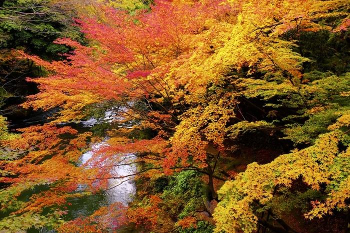 こおろぎ橋の下に広がる渓谷「鶴仙渓(かくせんけい)」には遊歩道もあり、秋の散策にぴったり。その美しさに惹かれて、松尾芭蕉が滞在したことでも知られています。