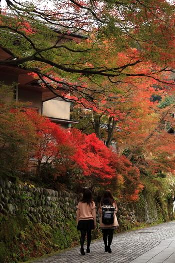 写真は「山中温泉」。石畳と紅葉のハーモニーが素敵です。