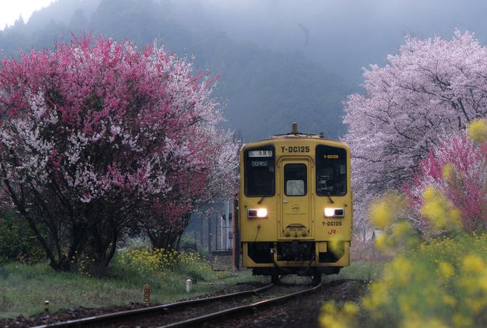 春が訪れる頃、宝珠山駅周辺には、桜と菜の花が見事に咲き誇ります。桜の花びらの桃色、名の花の黄色、周囲を取り囲む森の緑が織りなし、春の宝珠山駅周辺は、まるで桃源郷のような美しさとなります。