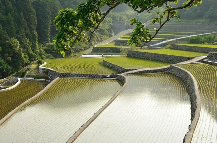 東峰村では私たちが想い描く日本の原風景が広がっています。まるで日本昔話の挿絵のような景色は訪れる人を魅了してやみません。