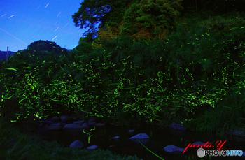 東峰村は、ほたるの里としても知られています。毎年5月末から6月中旬頃にかけて、日が暮れるとゲンジボタルが現れ、見事な舞いを披露してくれます。