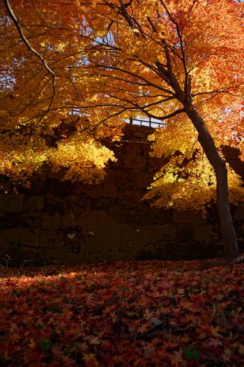 まるでじゅうたんのように、辺り一面に積もる落ち葉。深まる秋の気配を味わいましょう。
