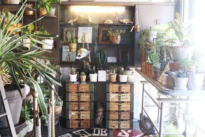 ショップでは植物なども販売。衣・食・住そしてアート、すべてがここで揃うお店なんです。