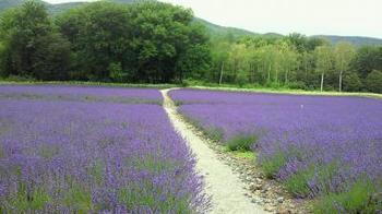 ラベンダーのやさしい香りに包まれながら歩く散歩道。北海道の大自然を満喫したなら、心身ともにリラックスできそうですね。  また、ラベンダーの森の中にある「文学の森」のなかには、富良野の有志の方が創作された句の歌碑が49基もあるそうです。