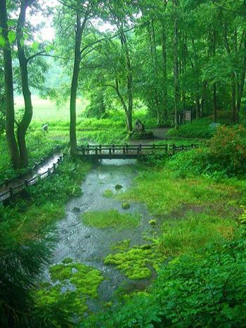 白馬小径の途中にある姫川源流では、岩魚や福寿草、バイカモの群生にも出会えます。隣に位置する「親海湿原」は日本の名水百選にも指定された湿原で、希少な生物を見ることができます。  夏の時期は清らかな川の流れと、みずみずしい緑に囲まれながら、ゆっくりとおさんぽしたいですね。