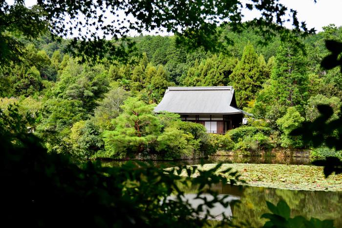 国の名勝に指定されている「鏡容池」は、毎年5月から7月の午前中は美しいスイレンが見られる池として有名です。池の周りには他にも桜・サツキ・ショウブなどが植えられ、サギやカモが飛来するので、ゆっくりと自然を愛でられる場所でもあります。