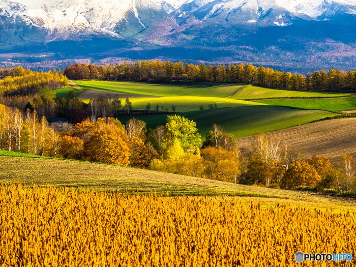 北海道の中央に位置する富良野と美瑛。美瑛は「美しい日本のむら景観百選」、富良野は「人と自然が織りなす日本の風景百選」に選ばれています。小麦の収穫がほとんど終わった晩秋の美瑛は、冬を目前にして輝く大地が広がります。