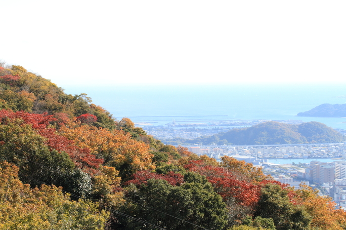 ひょうたん島とは、阿波踊りで有名な徳島市の中心街の川に囲まれた中州のこと。川岸には公園が数多くあり、自然を楽しみながらのお散歩が楽しめるだけでなく、眉山山頂にある展望台からは、日中の市街地を望む風景から夜景に至るまで素晴らしい景観を一望することができます。秋は紅葉も有名ですよ。