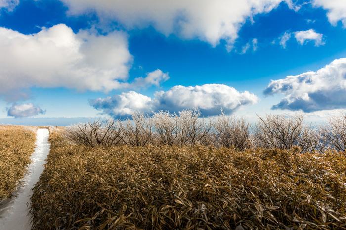 雲に手が届きそうなさんぽ道。都心からも週末に行きやすい神奈川県の箱根駒ヶ岳は、四季折々の美しい自然が目の前に広がります。