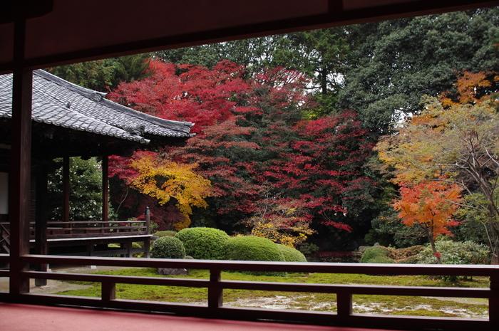 名勝・小野梅園がある梅の名所として知られる隋心院は、紅葉の名所でもあります。紅、赤、朱色、黄色と鮮やかに彩った樹々が、境内の庭園の美しさを引き立てています。