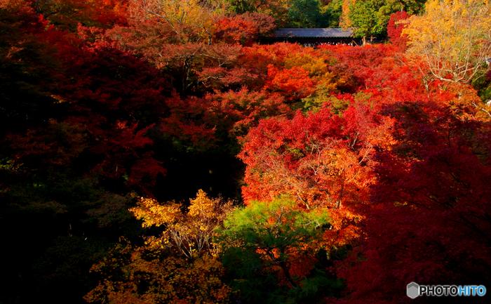 東福寺境内の深い渓谷の美しさは息を呑むほどです。鮮やかに彩った樹々、深い谷を流れるせせらぎが織りなす景色は、まるで絵画のような素晴らしさです。