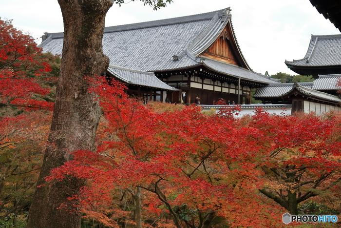 京都最大で日本最古の伽藍である東福寺は、鎌倉時代に創建された臨済宗東福寺派の総本山で、京都を代表する紅葉名所の一つです。