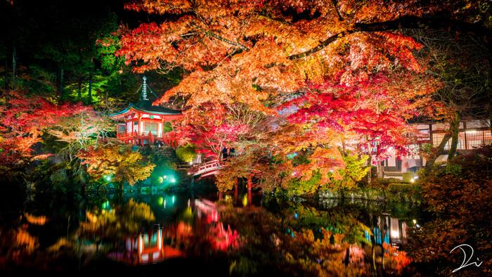 醍醐寺では紅葉の季節になると、ライトアップが開催されます。ライトを浴びて輝く紅葉と寺院が、夜闇に浮かび上がる幻想的な風景は参拝者を魅了してやみません。