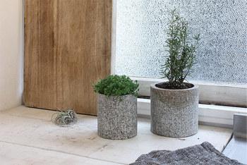 植物と自然素材の石は本当に相性が良く、お部屋のインテリアとしてナチュラルで心地よい空間を演出してくれます。