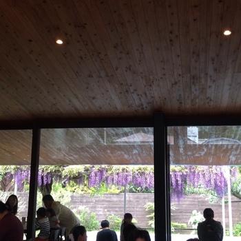 春には桜や藤の花が咲き乱れます。天井も高く開放感ある店内からも眺めることができますよ。
