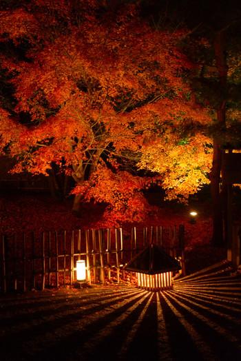 宝厳院境内の紅葉の美しさは格別です。ライトアップされた紅葉が延々立ち並ぶ参道を歩いていると、まるで深紅に燃え盛る炎の中を歩いているような気分を覚えます。