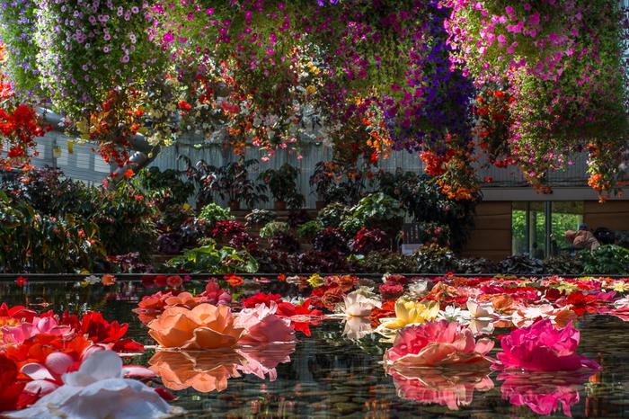 ベゴニアガーデンでは、天井から足元、正面から真後ろまで360度、色鮮やかな花々が咲き乱れています。