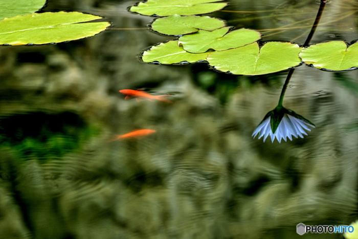 温室の中で、植物や花に囲まれながら、身も心も温まり、リフレッシュできそうですよね。ぜひ、お出かけしてみてはいかがですか?
