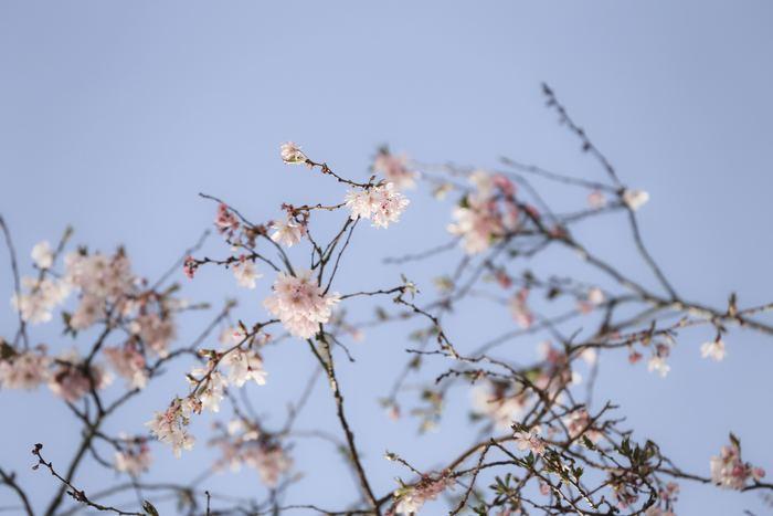 もうすぐ春本番。ぽかぽか陽気の日は、ふんわり春色スイーツでほっこりしたくなりますよね。