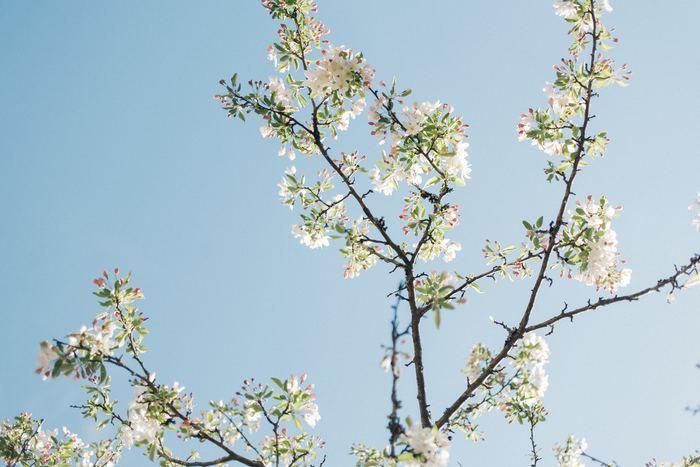 この春から自分をもっと磨きたい!何かを始めてみたい!という方におすすめなものや習い事をご紹介しました。新しい自分になるための素敵な一歩を、ほんのちょっとだけ勇気を出して踏み出してみませんか?何かに熱中する自分はきっと輝いているはずです。