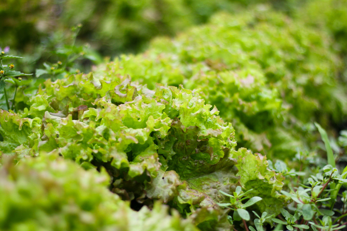 春は野菜が豊富に出回ります。そこで今回は、緑の野菜を更に美味しく、緑を生かした美しいレシピをご紹介したいと思います。