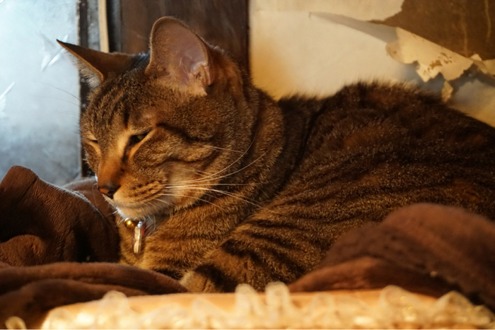 普段はお店の2階のベランダにいる太郎ですが、店内を散歩したり眠っていることも。愛らしい看板猫に遭遇したいですよね♪