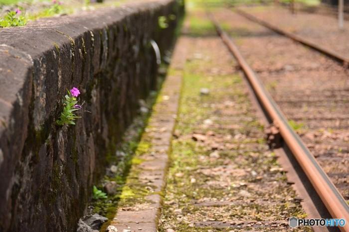 """電車は、待っていれば次が来ます。次の電車を待つ間に、少しだけ背筋を伸ばして風景を楽しんでみてください。普段だったら気づかないようなこんなところの小花にも、""""キレイだな…""""と感じる心の余裕も生まれてきます。"""
