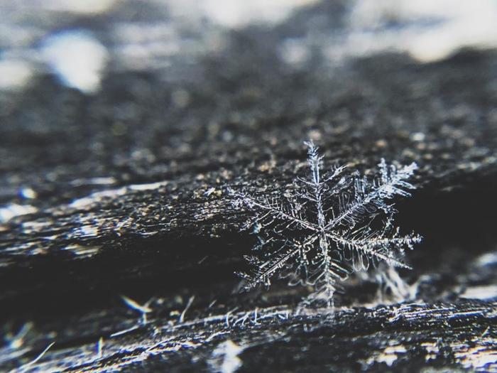 同じ形のものはひとつも無いという雪の結晶。寒さの厳しい時期なら、虫眼鏡でも見ることができるそうです。