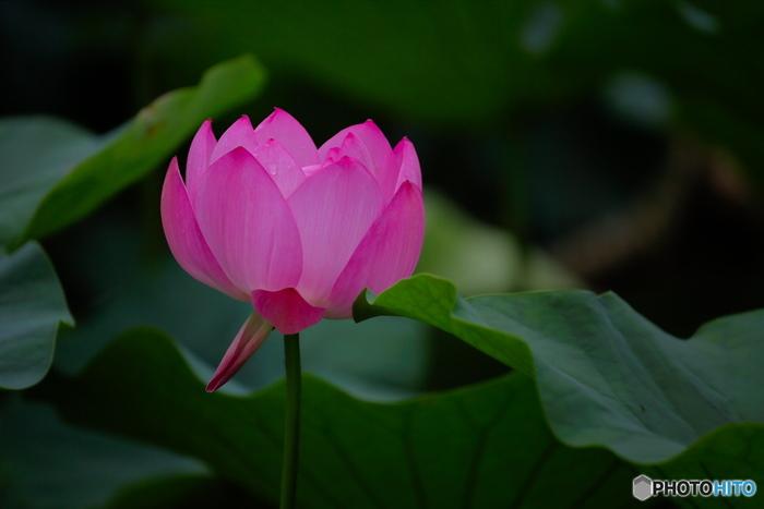 オニバス自生地もあり、初夏には美しいハスの花が楽しめる名所としても有名です。