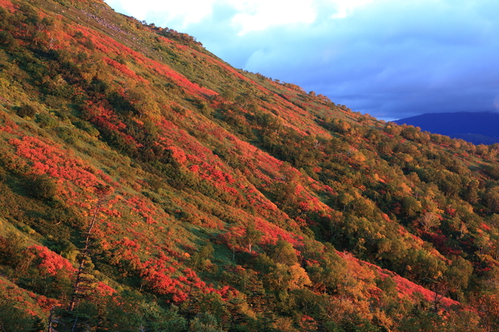 深紅、朱色、緑、朱色、黄色に染まった樹々が入り混じり、僅かな色合いの違いが折り重なる景色はいつまで眺めていても飽きることはありません。