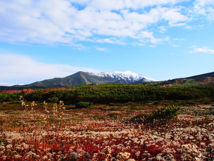 北海道中央部を縦断する火山群、大雪山は日本で最も早く紅葉の見ごろが訪れる場所です。