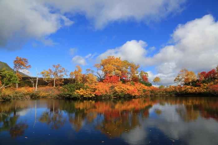 深紅、朱色、黄色の葉と常緑の針葉樹が見事に融和し、秋の旭岳は山全体が錦に覆われたかのような美しさです。
