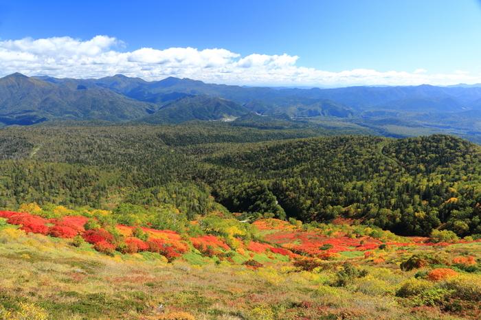 大雪山を代表する眺望スポットのひとつ、銀泉台で見られる紅葉の素晴らしさは格別です。山麓に広がる常緑針葉樹林の緑、幾重にも折り重なる山容、朱色、黄色、深紅に染まった落葉樹が織りなし、一幅の掛け軸のような景色が広がっています。