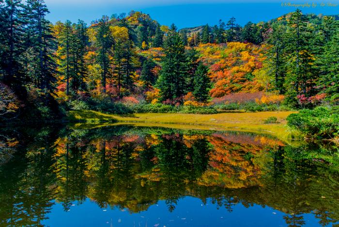 常緑針葉樹と、落葉樹が入り混じった滝見沼の紅葉も見逃せません。静かな水面が、樹々の絶妙な色の違いを鏡のように映し出す様は、神秘的で幽玄とした雰囲気が漂っています。