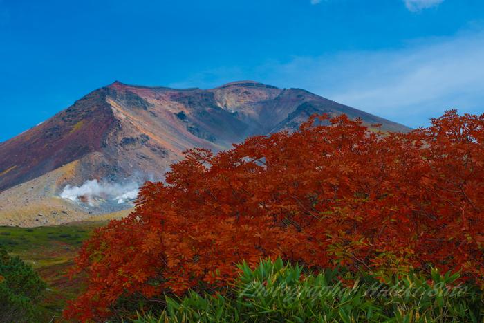 中でも大雪山主峰で、北海道最高峰の旭岳での紅葉の美しさは傑出しています。