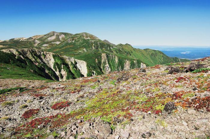 黒岳は、大雪山にある活火山で、標高1984メートルの山です。山頂では、背丈の低い高山植物が紅葉しています。
