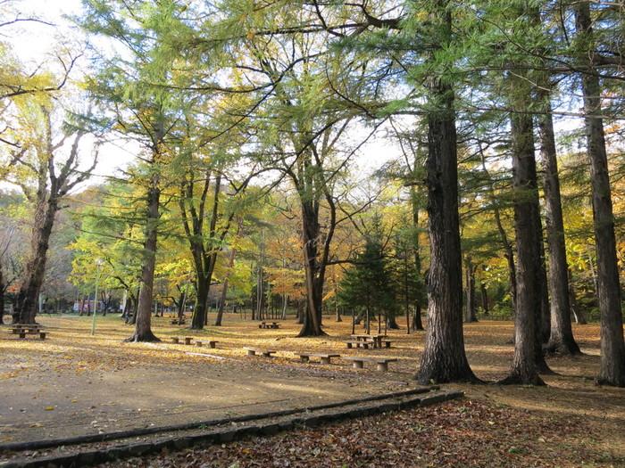 札幌市中央区に位置する円山公園は、円山原生林に隣接しており、豊かな自然が残されています。公園内には、様々な落葉樹の樹々が生い茂っており、紅葉見物をしながら森林浴を楽しむことができます。