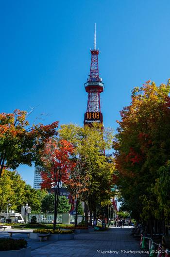 札幌市の中心地、札幌駅から東西約1.5キロメートルに伸びる大通り公園は、札幌を代表する公園です。冬は雪祭り、夏はさっぽろ夏まつりの会場となる大通公園は、日本の道100選、日本の都市公園100選、都市景観100選、日本の歴史公園100選に選ばれています。公園内の樹々は秋になると見事に紅葉し、この時期ならでは美しい景色を見せてくれます。