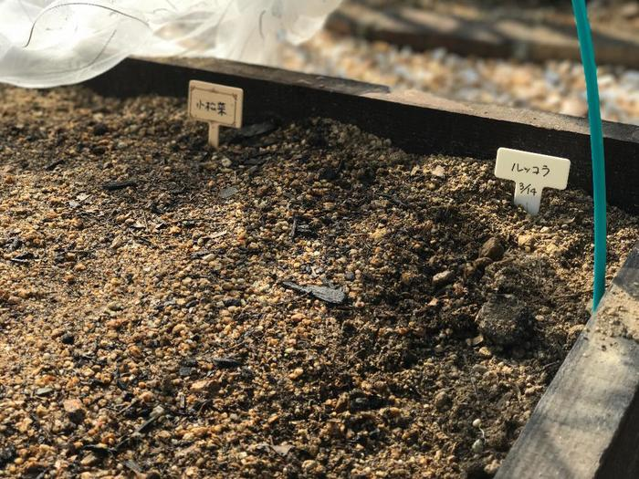 ・プランターの八分目まで培養土を入れます。  ・支柱などを使い、深さ5mmのまき溝を作り、1~1.5cm間隔で種をまいていきます。土は薄目に被せて、手で軽く押さえます。