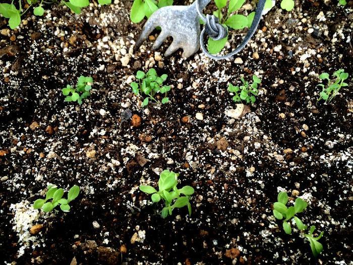 ・野菜を植える位置を確認するため、まず仮置きします。太陽の日差しを考えて、背が高くなるものを奥にして、ゆったりめに配置しましょう。 ・配置が決まったら、苗をそっと取り出し、土の上に置きます。そして苗と苗の隙間に土を入れて丁寧に埋めていき、最後に軽く土を押さえます。