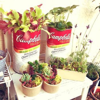 手軽に葉野菜をかわいく仕立てるなら、お洒落な容器で育てるのが手っ取り早いです。空き缶やブリキはグリーンとの相性がピッタリです。底に穴をあけてから使いましょう。