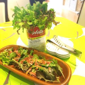 食卓にあげた時も、たくさんの野菜が混ざっていたほうが見た目もかわいらしく、栄養バランスも良くなりそうです。家庭菜園で育てたベビーリーフは苦味がなくとってもおいしいんですよ。