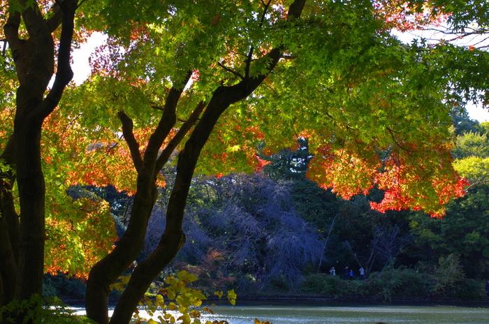 見上げるような高い木々や緑が生い茂っている美しい森。敷地面積も207000㎡(東京ドームの約5倍)!