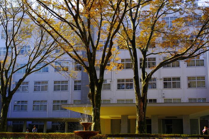 橋をわたると、正面に建物は「小平記念館」という大きな建物があります。建物の中は入れません。  春には、この桜の木が満開になるそう♪