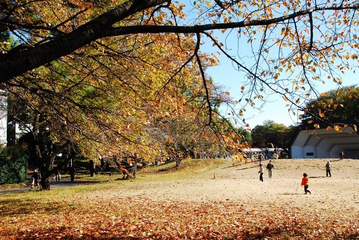秋は落ち葉が地面を覆います。