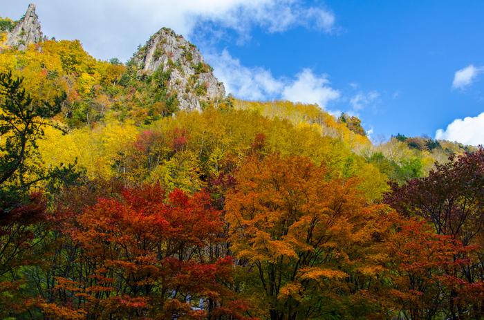 柱状節理の大峡谷が24㎞に渡って続く上川町石北峠の「層雲峡」。9月下旬ごろから紅葉が始まり、10月中旬には見ごろを迎えます。イタヤカエデやナナカマドなど赤や黄色のコントラストが美しく、国道39号線を車で走っているだけでも見事な風景が見られます。