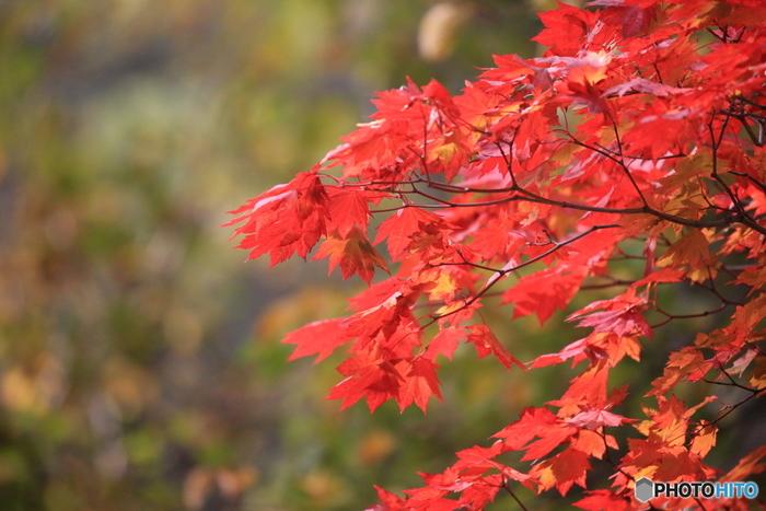 どこよりも一足早く紅葉が楽しめる北海道。たくさんの自然が残る北海道だからこそ、スケールの大きな紅葉が見られます。秋の北海道で素敵な思い出を作ってみませんか?