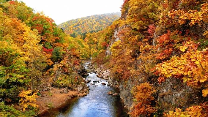 かっぱ淵の二見吊橋やいこい橋の辺りから眺める紅葉は特に見事で、自分のペースで歩きながら楽しむことができます。また、定山渓の紅葉スポットを巡る「紅葉かっぱバス」の運行や、山頂から紅葉を眺める「紅葉ゴンドラ」も運行され、様々な角度で楽しめます。