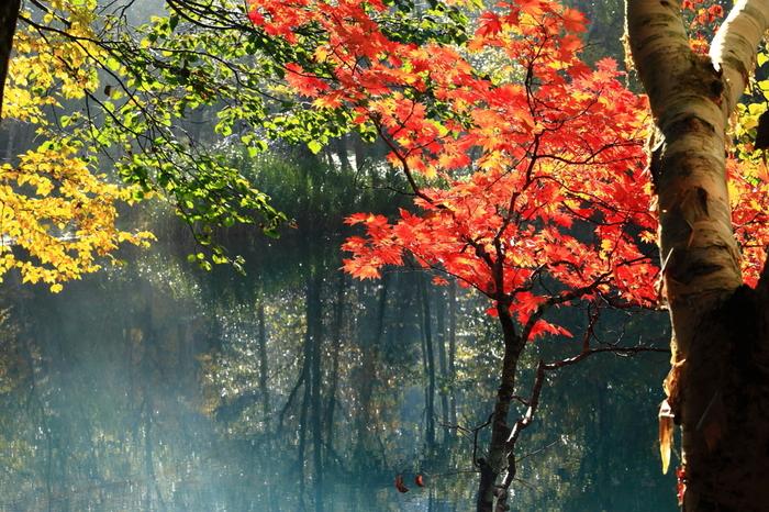 オンネトーでは、風のない秋の日には湖面に紅葉した木々が映り込み、とっても神秘的な雰囲気。昼夜の寒暖の差も大きいため、北海道の中でも特に美しい紅葉スポットと言われています。