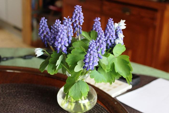 小瓶にちょっと生けてテーブルに飾るだけで空間が華やぎます。クリスマスローズなど、白色の花と合わせるのも◎。